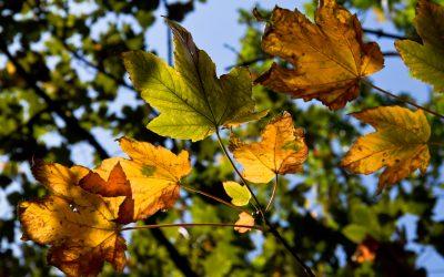 leaf m