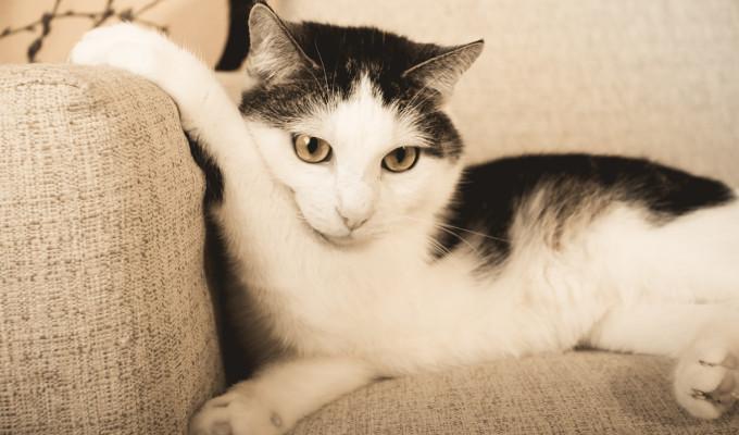 Spontanes Katzenshooting