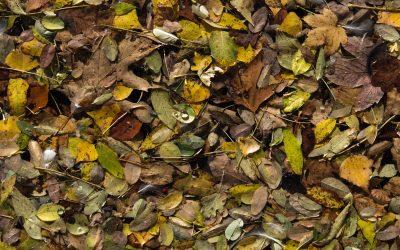 sea leafs m